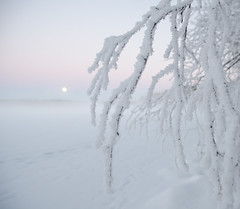 Winter Moon (Mikael R.) Tags: winter wonderland snow ice lake tree branch moon sky color dusk rising white tranquil peaceful forest finland nikond7000 sigma1750mm photography camera