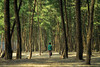 The little walking tree to the jungle (Aranya Ehsan) Tags: people life lifestyle minimalism tree forest green color colors composition frame aranya 2017 bangladesh