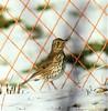 La star (La Magie Du Moment) Tags: oiseau oiseaux nature neige nikon extérieur hiver jaune jolie tache bec plume macro magique tranquille