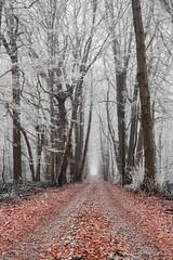 Winter. #winter #stilllife #cold #nature #iced #hiver #blackandwhite #whiteandblack #bnw #wnb (fredericbeaudequin) Tags: winter stilllife cold nature iced hiver blackandwhite whiteandblack bnw wnb
