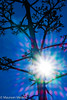 Lens Flare Century Plant (Maureen Medina) Tags: maureenmedina artizenimages plant centuryplant flower lensflare sun prism
