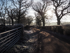Monastery Walk 365-018 (chocoholicbumpkin) Tags: 365 january juliemitchell sussex st hughs charterhouse winter 2017 frost sunshine southdownsphotographics