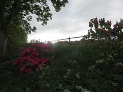Flowers (spaceyt29) Tags: flowers sky tree clouds bushes