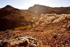 Un petit tour dans le Haut Atlas (Elise Blanchard) Tags: pictures mountain photo photographie elise photos picture morocco maroc atlas blanchard bou berbère photographies hautatlas aït amazigh ouli amazig sagho