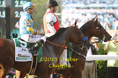 American Pharoah (a_chalfin) Tags: usa ny belmont thoroughbred triplecrown kentuckyderby travers preaknessstakes elmont