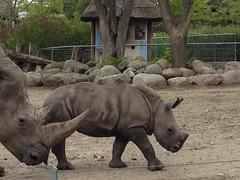 129/365 Small Rhino