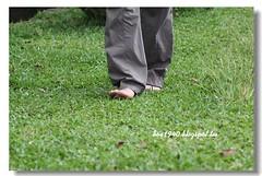 IMG_0394 (盒子(Box)) Tags: 三峽 茶園 槭樹 蛇莓 菫菜 薊 森林步道 鳥不踏 扛板歸 熊空農場 台灣農林 熊空休閒農場 熊空茶園 海拔七百公尺