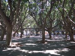 ombrage sous la piazza Cairoli, Messine (jmhau94) Tags: messine piazzacairoli arbres ombrage fraîcheur messina sicile sicilia piazza cairoli