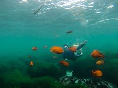 Blendin' in (maxroseman) Tags: california beach swim sandiego dive lajolla gopro hero3
