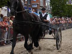 Race on Frisian horses, 2015 (Alta alatis patent) Tags: horses action traditional fries paard sulky joure frisian frysk hynder hurdrijderij