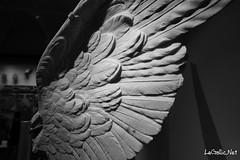 Ailes de Statues - Rome - Italie (vlegallic) Tags: old blackandwhite sculpture rome roma art monochrome statue italia noiretblanc pierre it tamron italie lazio aile ancientart tamronsp1530mmf28divcusd tamron1530 tamronsp1530
