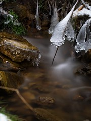 Splish Splash and Ice (Mulewings~) Tags: creekadventure creekbottom iceformations sticks rocks water icedrops thecreek theproject winter