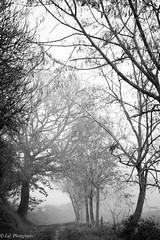 20161231Brouillard-10 (loflol) Tags: coteaux brouillard brume ancien grain