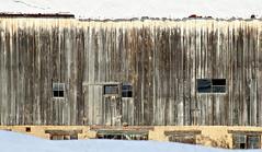 Snowed In (Doris Burfind) Tags: barn farm sideroad haltonhills snow winter