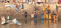 Holy Water (peterkelly) Tags: digital canon 6d india asia varanasi gangesriver water river colours colors colour color sari women yellow steps stairs ghats ghat gull hinduism blessing sacred bathing bathe ganga