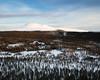 Städjan II (Gustaf_E) Tags: dalarna forest idre landscape landskap morgon naturreservat pine pines skog snow snö städjan sverige sweden tall vinter winter woods