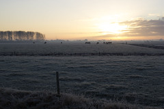 Cold Sunrise (Martijn A) Tags: sunrise zonsopgang dawn cold koud autumn herfst frozen bevroren ice ijs sun zon light licht nature natuur farm canon d550 dslr 35mm lens gelderland gelders the netherlands dutch wwwgevoeligeplatennl guelders boerderij cows koeien