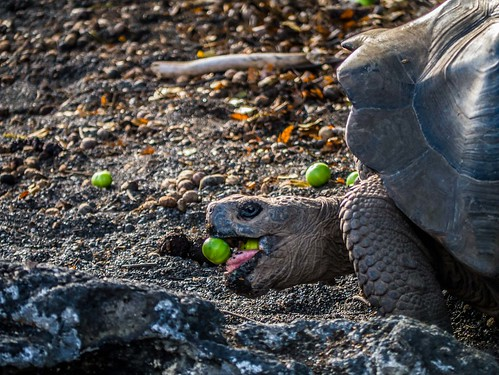"""Galapagos-64.jpg • <a style=""""font-size:0.8em;"""" href=""""http://www.flickr.com/photos/91306238@N04/31629767294/"""" target=""""_blank"""">View on Flickr</a>"""