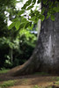 Jequitibá (Gabriel Castaldini) Tags: árvore tree huge parque park ecologia bioma nature natureza naturelovers mataatlântica cerrado floresta jungle arbre ecologie green verde preservação meioambiente environment environnement développementdurable desenvolvimentosustentável sustentável sustainability natura naturaleza medioambiente sostenibilidad vassununga sp santarita santaritadopassaquatro interior sãopaulo rodoviaangangüera