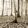Rolleiflex promenade 3 (Claudio Taras) Tags: claudio contrasto controluce 6x6 film fomapan taras trier wald albero bw bokeh biancoenero tlr toned rolleiflex35f rodinal rollfilm bokehlicious