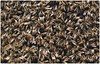 Rivolta operaia_013 (bartric - Bartolomeo) Tags: api sciamatura nikon d100 nature rivolta bartolomeo bees