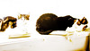 3 cats relaxing (PDKImages) Tags: cat black ragdoll monochrome pet animal feline blackcat asleep eyes calming
