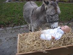 7 (markusfaber) Tags: weihnachtsgeschichte esel