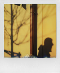 Everything is illuminated (ale2000) Tags: polaroid impossible instant sx70 instantphotography analog analogue lights luci shadows ombre silhouette yellow giallo tree albero branches rami naked winter wintertime illuminated frame framed