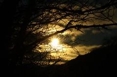 sunshine...................... (Suzie Noble) Tags: strathglass struy sunshine sun tree sunday january