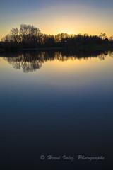 Matin_DSC1811 (hervv30140) Tags: france languedoc eau lac reflet soleil ciel clair simple levant lever matin aube aurore arbre ombre obscur noir bleu jaune or paysage nature hiver froid figé calme miroir art