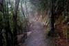 山中遊038 (kingston Tam) Tags: moss grass path hillside hiking field bigtree oddtree garden nature fujifilmxt1