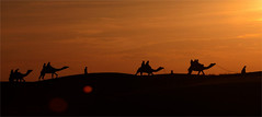 Camel-Safari-Jaisalmer (Top Indian Holidays) Tags: camel safari rajasthan