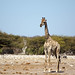 DSC09642 - NAMIBIA 2013