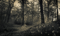 Misty Wood (GenerationX) Tags: trees mist green leaves fog sunrise landscape dawn scotland moss spring forrest unitedkingdom scottish neil calm gb trossachs spiderwebs webs barr aberfoyle lochard lochardforest