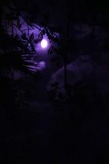 Planet caravan (anna aguirre) Tags: camera new trees moon clouds digital high purple space planet hi caravan buzzed
