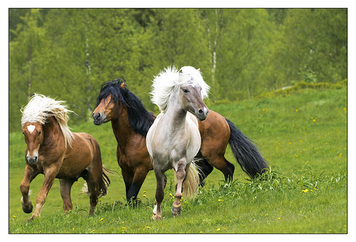Stallions new edits