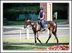 Lauren on Clement Trainee (EASY GOER) Tags: park horses horse ny newyork sports race canon track belmont mark iii running racing 5d athletes races 56 thoroughbred equine thoroughbreds 400mm markiii