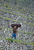 Peru-0669.jpg (Matt and Debbie) Tags: peru inca llama trail 2015 wayna winaywayna winay