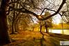 Embankment Sunburst (Rob Felton) Tags: thegreatouse theembankment embankment river bedford bedfordshire robertfelton felton willow reflection tree water salix fog mist trees sunflare light shadow shadows goldenhour