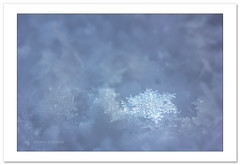 One of many (Horia Bogdan) Tags: snowflake macro winter ice snow detail abstract blue white horiabogdan