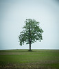 Of Solitude (13skies) Tags: solitary lonely lonelytree hill horizon sky green strong strength belief believe security rise upward leaves trunk branches grass ononesown solo deserted individual unassisted stag single lone friendless meandmyshadow desolate forlorn oneself detached remote distant isolated sole