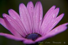 Rain Drops (Pittur001) Tags: rain drops cannon 60d charlescachiaphotography charles cachia photography colours wonderfull excellent flicker award amazing valletta malta