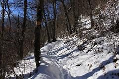 les Follatères, forêt de la Lui (bulbocode909) Tags: valais suisse fully branson follatères forêts arbres sentiers hiver neige bleu nature montagnes