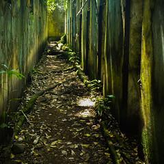 Bagne des Iles du Salut (tyepaprocki) Tags: plants vert green végétation tropicale forêt forest