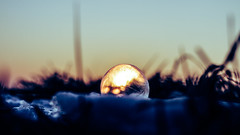 Frozen Bubble (TheBSF) Tags: sun light bubble nature bright fun sunlight soap outdoors colorful bubbles meadow reflection closeup sunset season sky grass park outdoor background winter snow