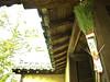 ゆるやかに、やさしく、やわらかい、そんな笑顔の年になりますように。 (aozora.umikaze) Tags: japan nara yuruyaka yasashiku yawakakaku egao aozora olympus pen epl3