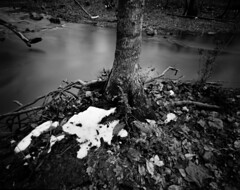 Snow Remnant, New Hope Creek (Pinhole) (F. Neil S.) Tags: harman titan 4x5 pinhole longexposure arista eduultra100 sheet negative film blackandwhite blancetnoir monochrome tripod creek flowing water tree roots snow winter bwfp