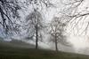 Bi (Paulo Etxeberria) Tags: bi dos two deux zuhaitzak árboles trees arbres lainoa niebla mist brouillard alonsotegi