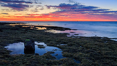 Ricketts Point (djryan78) Tags: rock victoria reflection landscape sunset sigma dslr bay pool seaweed outdoor canon canon6d 24105 dusk melbourne 6d clouds tide australia portphillip sigma24105 cloud rickettspoint beaumaris sky seascape portphillipbay water lowtide bluehour au