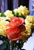 DSC_4270 (PeaTJay) Tags: nikond750 reading lowerearley berkshire macro micro closeups gardens indoors nature flora fauna plants flowers rose roses rosebuds